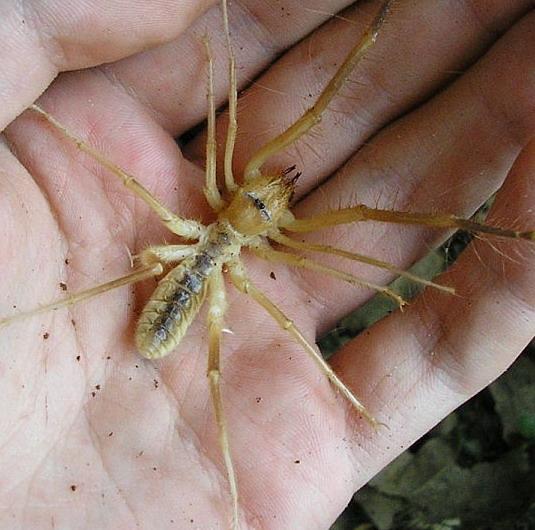 считали фаланга паук фото волгоград целом